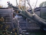 Storm damage tree removal.
